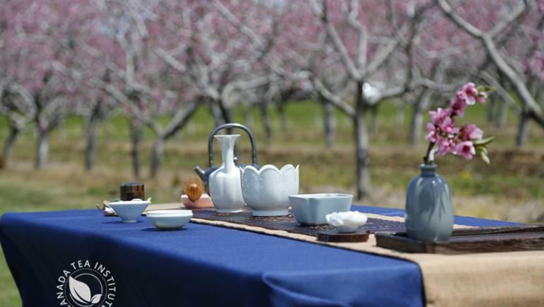 """桃花雅集—-加拿大茶学会""""520""""桃花茶会优雅举行"""